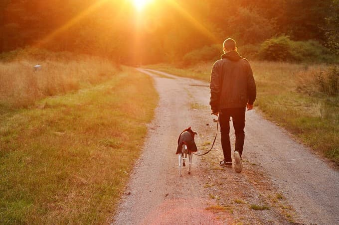 How Pets Ease the Stress of Recovery